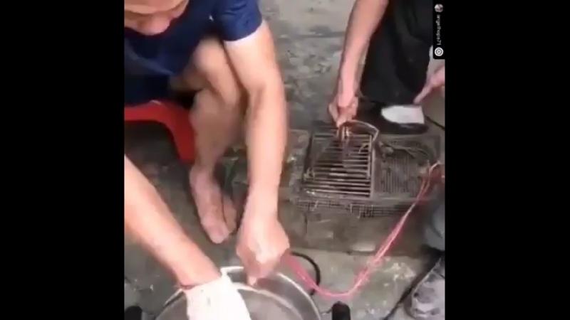 So zieht man einer Ratte am leichtesten die Haare ab....😳