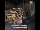 Газпром - мечты сбываются.Жители России рискуют провести зиму без дров