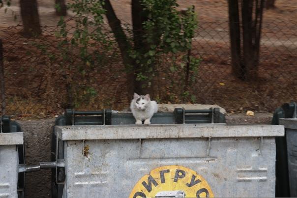 Коты — местная особенность. Они тут с мудрым взглядом всегда.