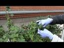 Защита плодовых деревьев и ягодных кустарников от болезней и вредителей.