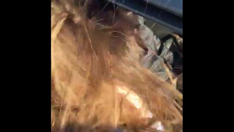 прайды валят ветер supersound валево pridecaraudio