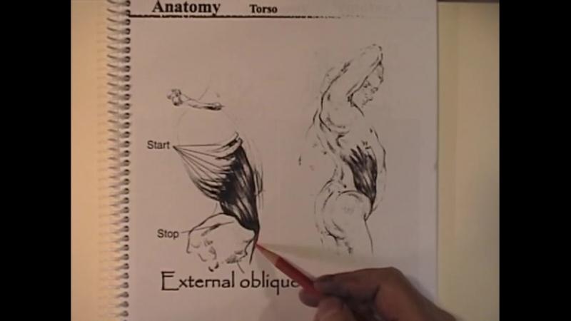 11 Anatomy part 2