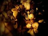 Catherina Pt.1 &amp Pt.2 - feat Claron McFadden - Wiegel, Meirmans &amp Snitker