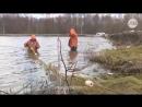 За племенными мальками парского карпа в Липецк едут со всей России