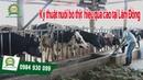 [Khomay vn] KỸ THUẬT NUÔI BÒ THỊT || Mô hình chăn nuôi mới nhất tại Lâm Đồng