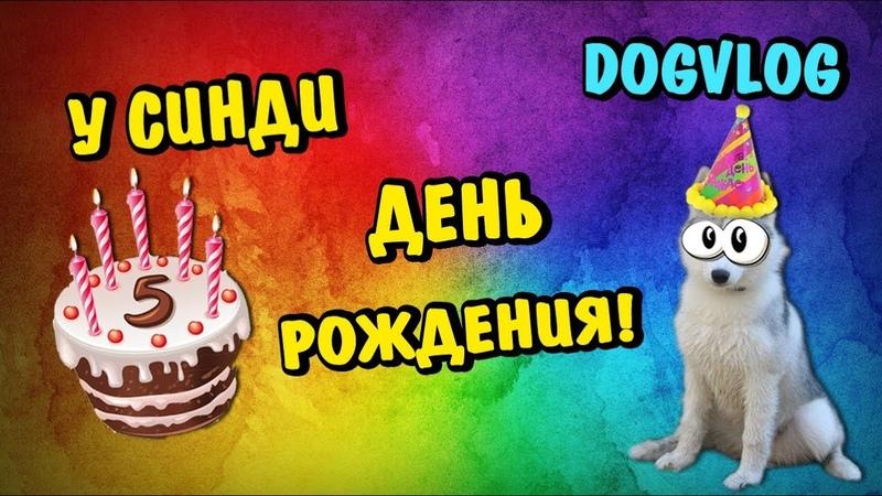 ДЕНЬ РОЖДЕНИЯ У СИНДИ - 5 МЕСЯЦЕВ! Говорящая собака