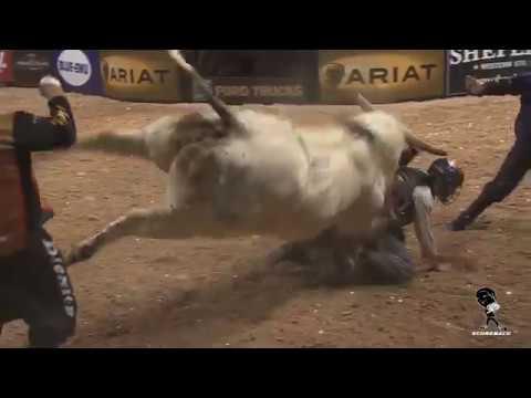 Быки и ковбои шокирующее родео