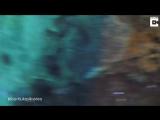 В сети набирает популярность видео о нападении мурены на дайвера