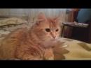 Моя Кошка Нюша. 2 февраля 2018 года