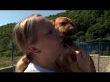 Из Сочи в Перу: как помочь щенку из России добраться в Лиму