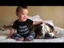 Ребенок пытается разбудить спящую собаку, это выглядит ну очень смешно