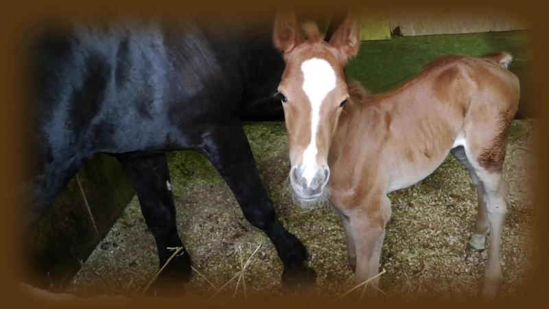 Жеребенок смуглой лошади ребенок ЗООПАРК