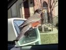 Неправильная птица)