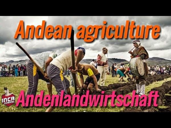 Agricultura andina - Андское сельское хозяйство