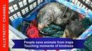Люди приходят на помощь животным, которые попали в сложное положение, грозящее им гибелью