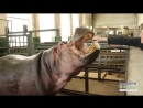 Як звірі у зоопарку Масляну святкували