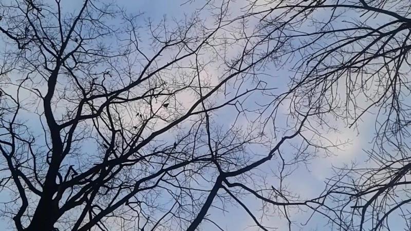 Ворона начало марта 2018 го