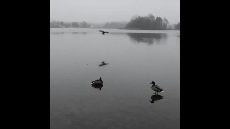 Landing like a boss Duck drift