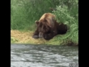медведь на рыбалке