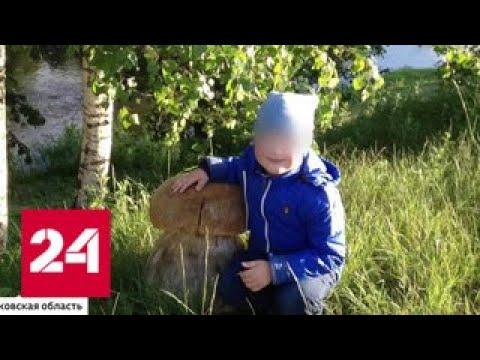 Убийство по неосторожности в Подмосковье возбудили дело после гибели 5-летнего мальчика - Россия 24