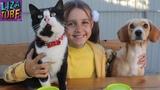 Челлендж Тафи VS Лиза Стиратели MARVEL CHALLENGE Funny Dog Taffi VS Liza Для Детей kids children