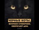 о котишках