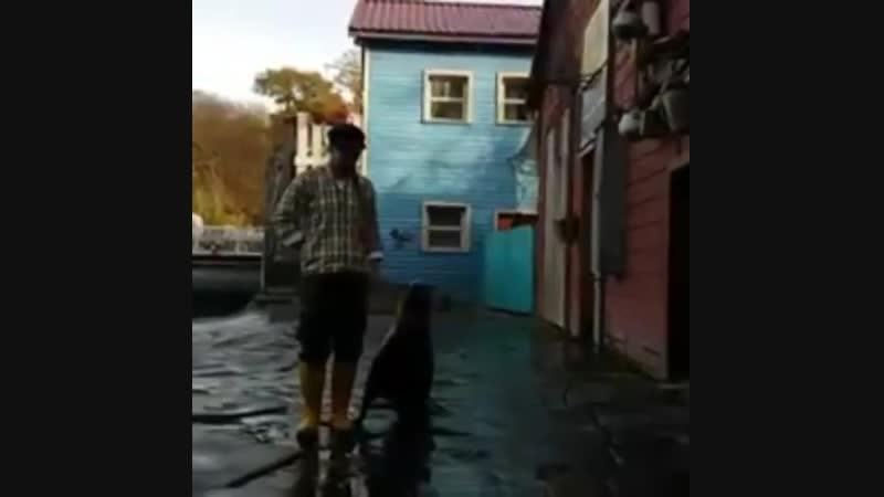 ИПО с морским котиком