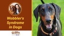 Синдром Воблера у собак / Wobbler's Syndrome in Dogs