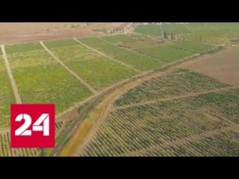Украина против здравого смысла: Киев плодит фейки о засухе в Крыму - Россия 24