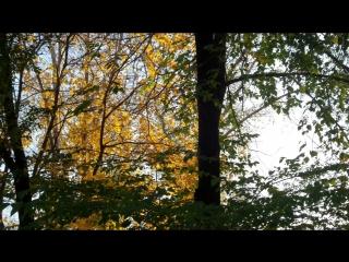 Осень прозрачное утро... Сквер на Салютной. Челябинск