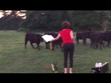 Woman plays saxophone to Cows at SunriseDawn