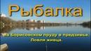 Рыбалка на Борисовском пруду в предзимье Ловля живца
