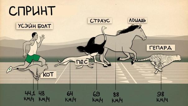 лучшие спортсмены против представителей животного мира животные сильнее человека, быстрее человека...