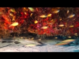 Tubbataha Reef, Palawan - UNESCO Heritage Site and a National Treasure