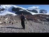 Странные дела в Антарктике