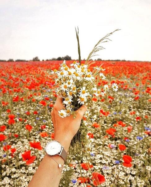 Жизнь и люди - большой сад цветов. У каждого свой цвет, аромат, история. Но абсолютно все они одинаково любимы солнцем.