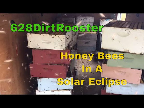 North American Solar Eclipse Day Honey Bee Watching, Getting Set Up 8 21 2017
