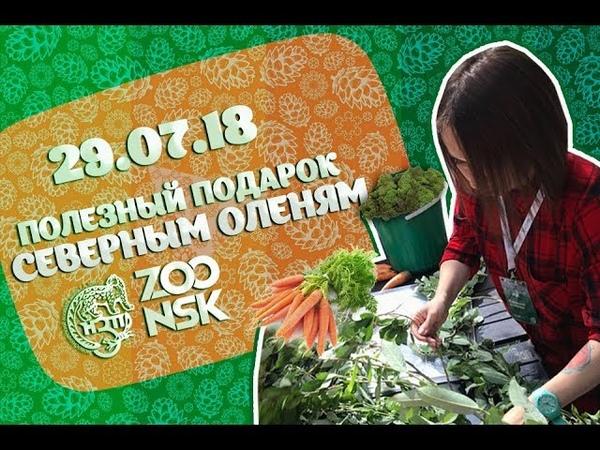 29.07.18 Полезный подарок для северных оленей в Новосибирском зоопарке имени Р.А. Шило