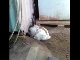 Кролик спасает котика