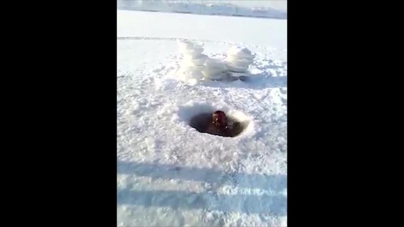 Дзед у мінус 40 нырнуў пад лёд