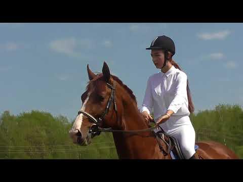 Конкур Татьяна и Эрудит Конно спортивный праздник в КХ Трошино смотреть онлайн без регистрации