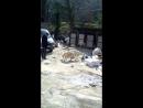 козы пасуться на помойке