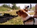 Аномальная жара в Мурманске