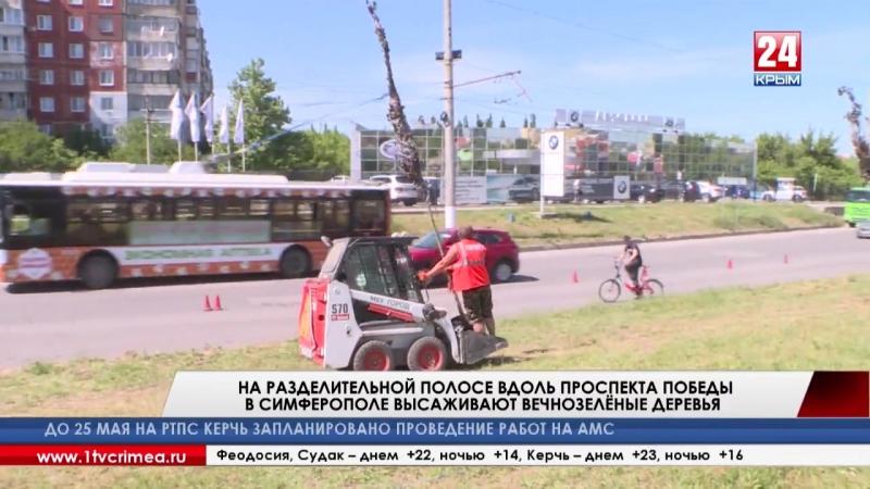 Новые кедры и можжевельники высаживают на разделительной полосе вдоль проспекта Победы в Симферополе