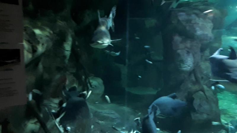 02.07.18г. 🦈🐟🐊🐢🐍🐢😊 Океанариум Тропическая Амазонка(Сочи)