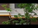 АНАПА 🐦КРАСИВЫЙ ДВОР у нового дома ЖК Тургеневский квартал и птичка поёт 8 мая 2018 года
