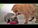 Gatti pazzi ✪ Gatti divertenti ✪ Prova a non ridere 25