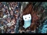Очаровательны горностай выскакивает из ствола дерева, чтобы сказать Привет