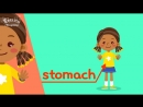 Kids vocabulary - Body - parts of body - Learn English for kids - English educat