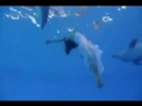 Dance With Dolphins
